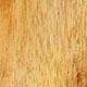 Сапиум салоносный, саловое дерево